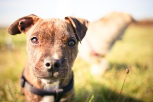 Animal Shelters Are Winning on Facebook: Here's How!