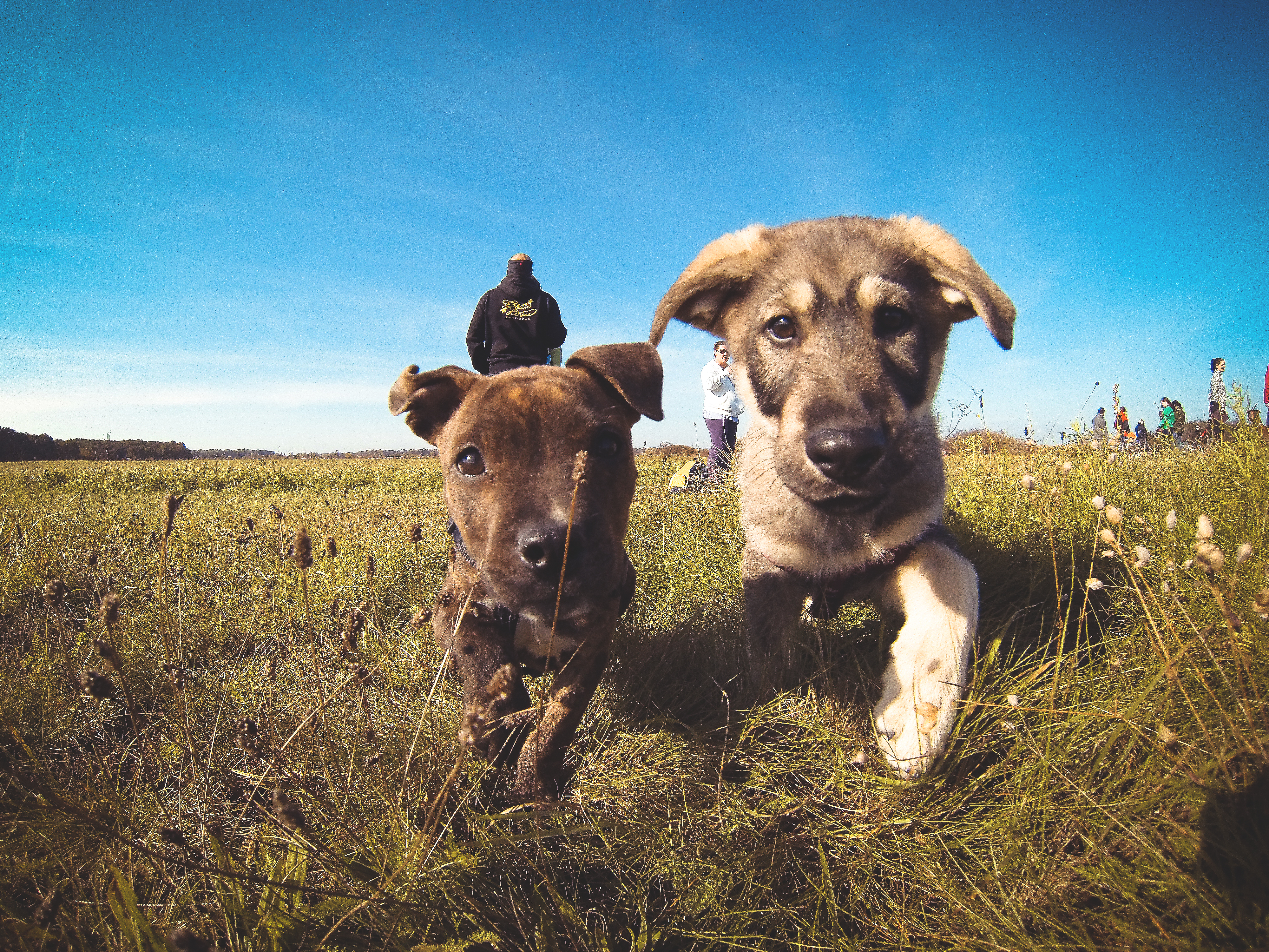 Qgiv's Top 3 Animal Shelter Fundraising Tips