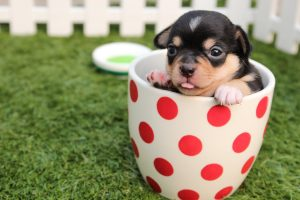 5 Effective Social Media Posts from Animal Shelters (and How to Copy Them)