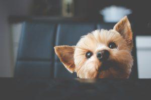 Effective Animal Shelter Fundraising through Social Media