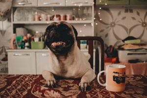 Happy pug visual storytelling example