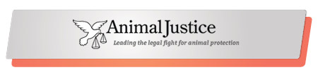 Animal Justice effectively launched and executed a capital campaign.