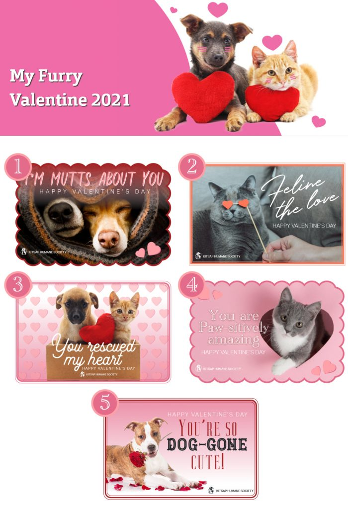 Kitsap Humane Society rocks their holiday-themed fundraisers. Checkout their My Furry Valentine 2021 campaign page.