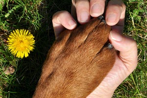 Can Fundraising Tools Help Animal Nonprofits Raise More?